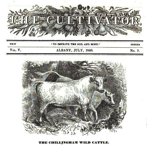 WILD WHITE CATTLE ARTICLE